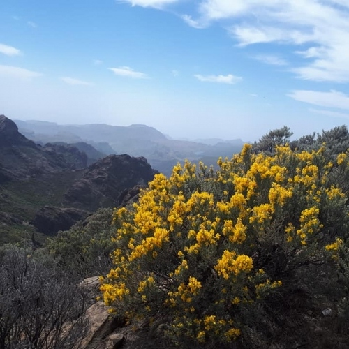 Guided walking in Gran Canaria