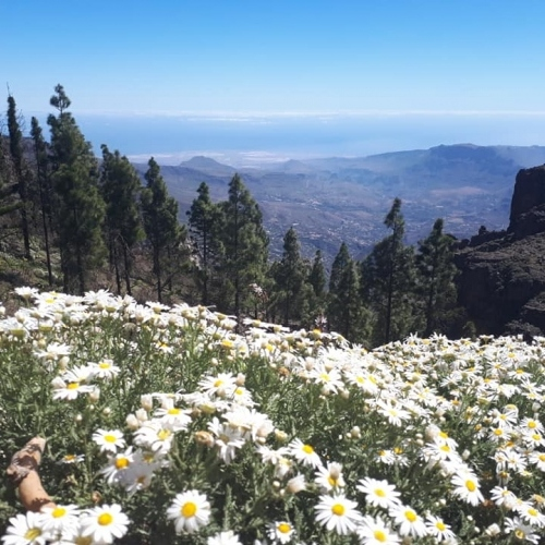 Spring walking in Gran Canaria