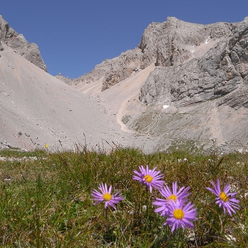 Guided walking -Wild flowers in the Dolomites