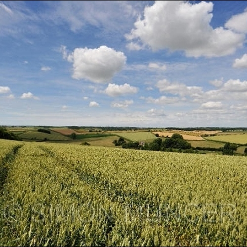 Guided walking in Dorset - miles and miles of open skies