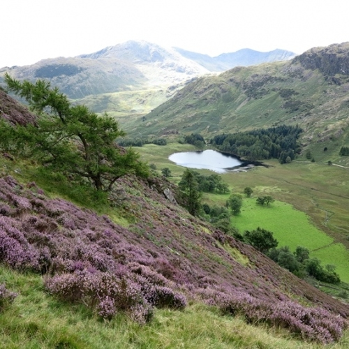 Guided walking in Lake District - distant view of tarn